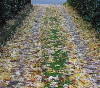 Camiño cheo de follas
